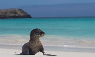 Galapagos Island Hopping Family Adventure