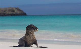 Galapagos Island Hopping Family Adventure