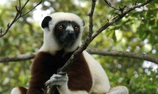 Western Madagascar - Ankarafantsika National Park Individual Tour Extension