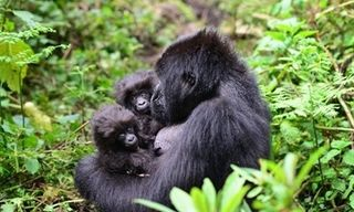 Ultimate Uganda & Rwanda Wildlife And Conservation Small Group Tour, Sept 2020
