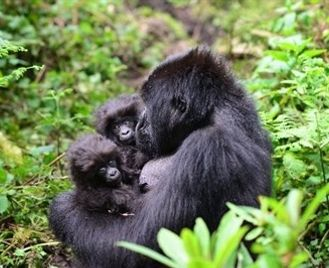 Ultimate Uganda & Rwanda Wildlife And Conservation Small Group Tour, Sept 2020