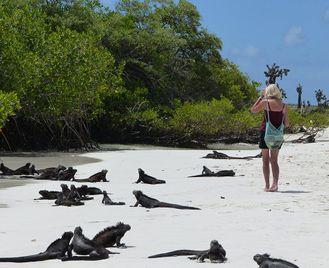 Ecuador And The Galapagos Islands
