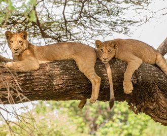 From The Serengeti To Zanzibar