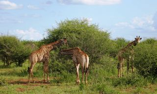 Kruger And Swaziland Safari