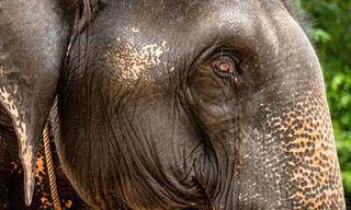 Wildlife & Culture Of Cambodia