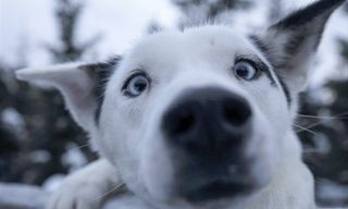 Finland Husky Experience Group Tour