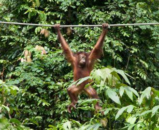 Borneo Rainforest & Beach