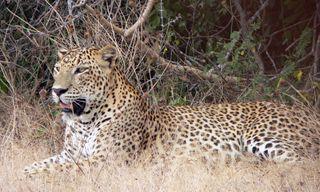 Sri Lanka Nature and Wildlife