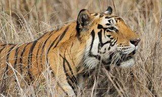 Wildlife in Madhya Pradesh