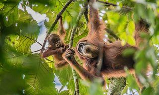 Borneo to Bali