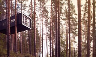 A Tree House Experience