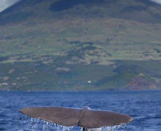 Azores Three Island Tour (D)