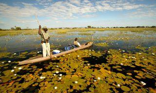 Blooming Desert - Kalahari, Khwai