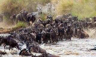 East Africa Safari & Beach - Masai Mara, Serengeti, Ngorongoro & Zanzibar