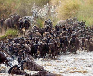 Best of Tanzania - Tarangire, Lake Manyara, Serengeti, Ngorongoro Crater