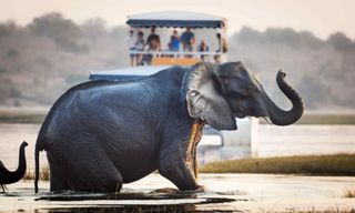 Ultimate African Taster - Victoria Falls, Kruger & Cape Town