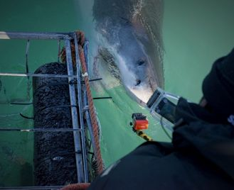 The Great White Shark Project