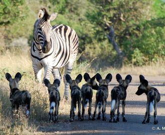 Zululand Wilderness Conservation Project