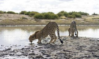 Namibia Wildlife Sanctuary