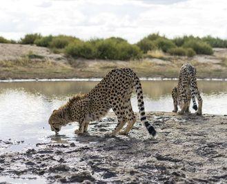 Namibia Wildlife Sanctuary