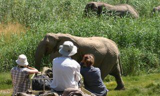 Conservation of Desert Elephants in Namibia