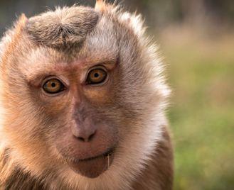 Wildlife Conservation in Laos