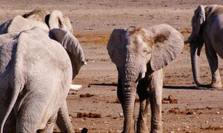4 Day Etosha Safari and Swakopmund Adventure Tour