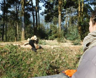 Panda Conservation Experience