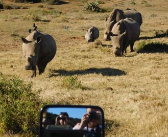 Big 5 Conservation Experience