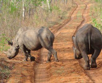 Victoria Falls Big 5 Conservation Project