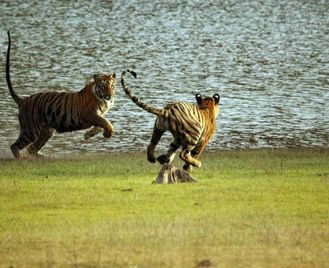 Golden Triangle & Tigers