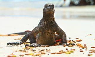 Sustainable Galapagos Island Hopping