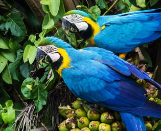 Brazil's Diverse Ecosystems and Culture