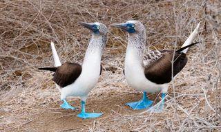 North Galápagos