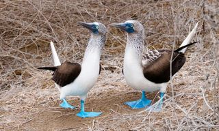 East Galápagos