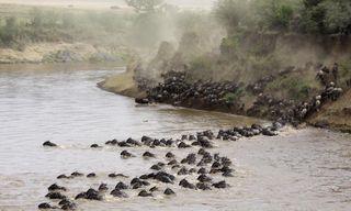 Serengeti & Zanzibar
