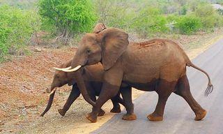 Kruger Safari & Victoria Falls