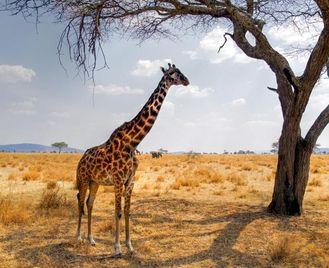 Maasai Mara & Serengeti