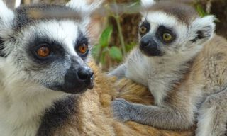 Secrets of Madagascar (17 Days)