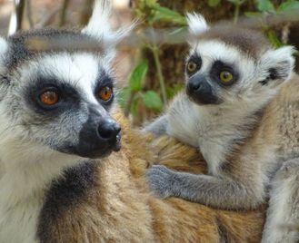 Secrets of Madagascar (17 Days)
