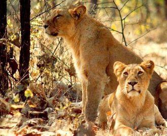 Big Cats and Small Kingdoms - Rajasthan and Gujarat