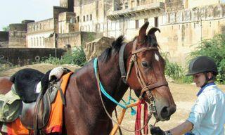 Balotra Horse Fair Ride