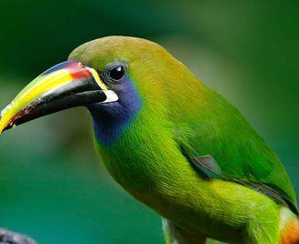 Birds & Beaches Of Costa Rica