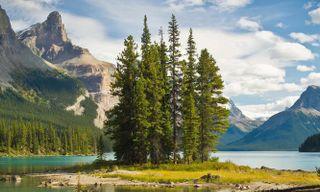 Alberta'S Summer Sensations