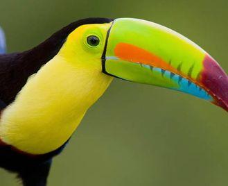 Costa Rica Self-Drive