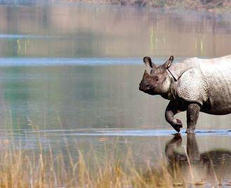 Indian River Cruise: The Brahmaputra