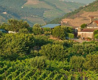Porto & The Douro Valley: Wines & Vines Fly-Drive