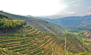 Walking In The Douro Valley