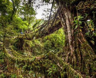 15 Days North East India: Living Root Bridges, Rhinos, Tea & Tribes