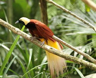 Birding In Paradise